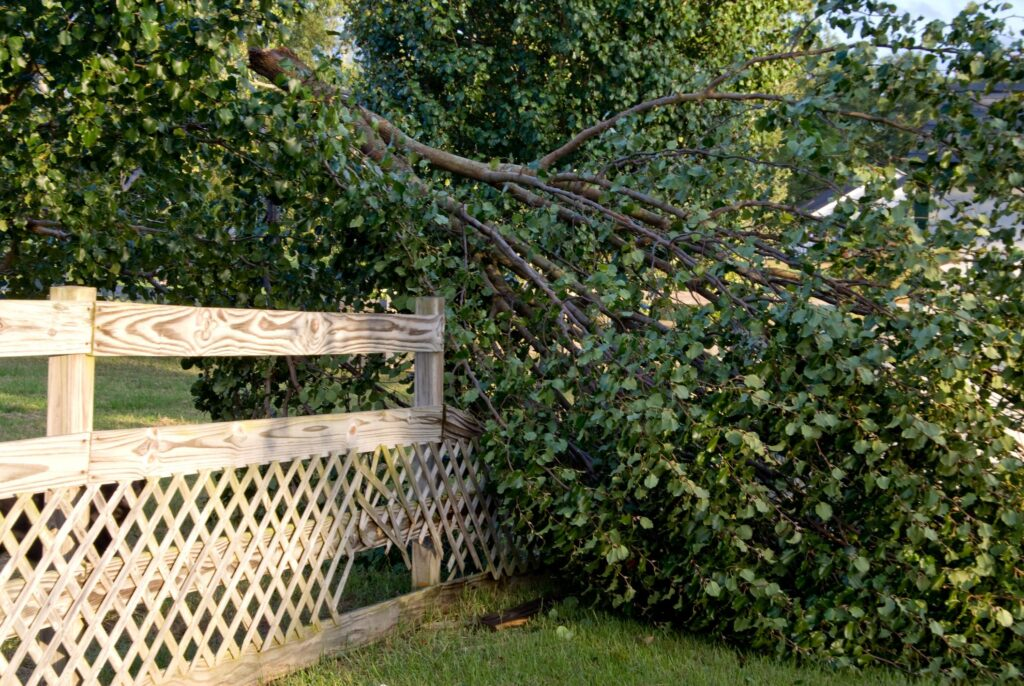 professional tree care emergency service