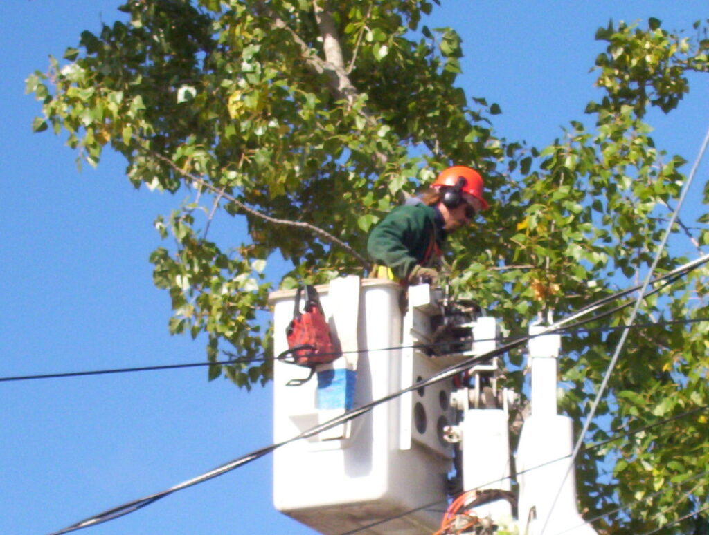 affordable tree care services