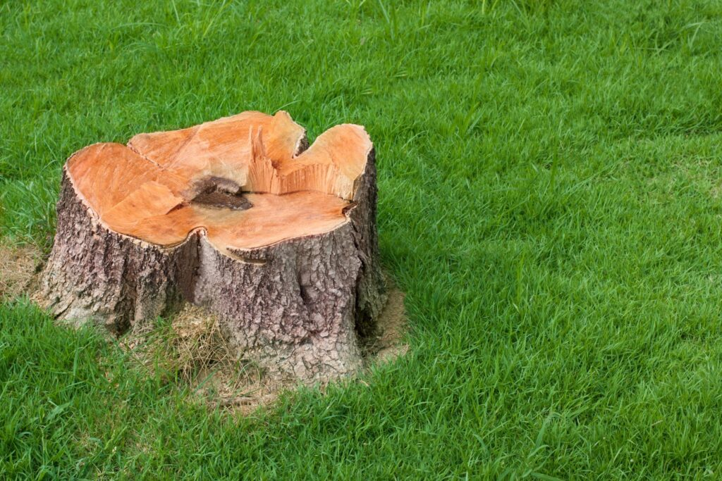 affordable stump grinding and removal