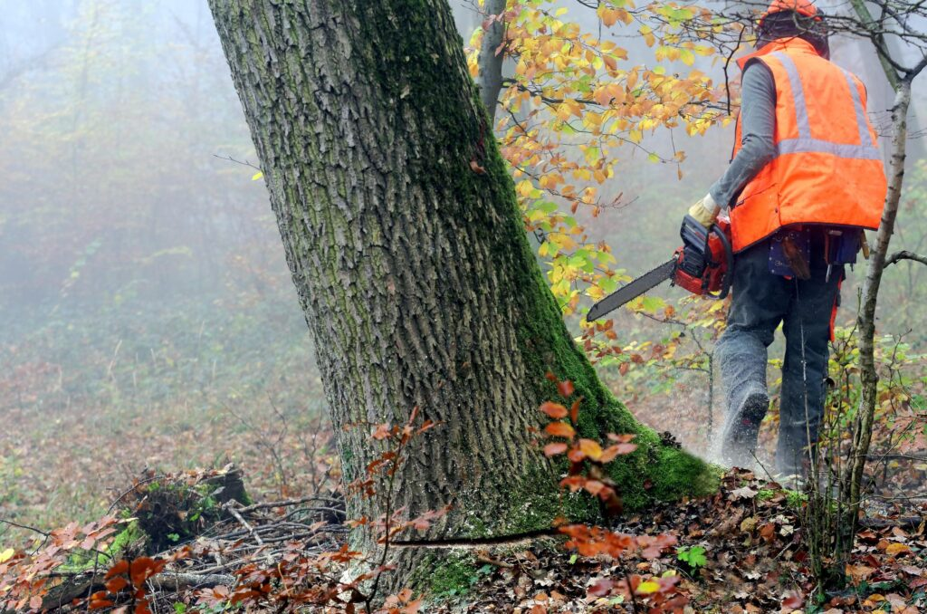 affordable tree removal services