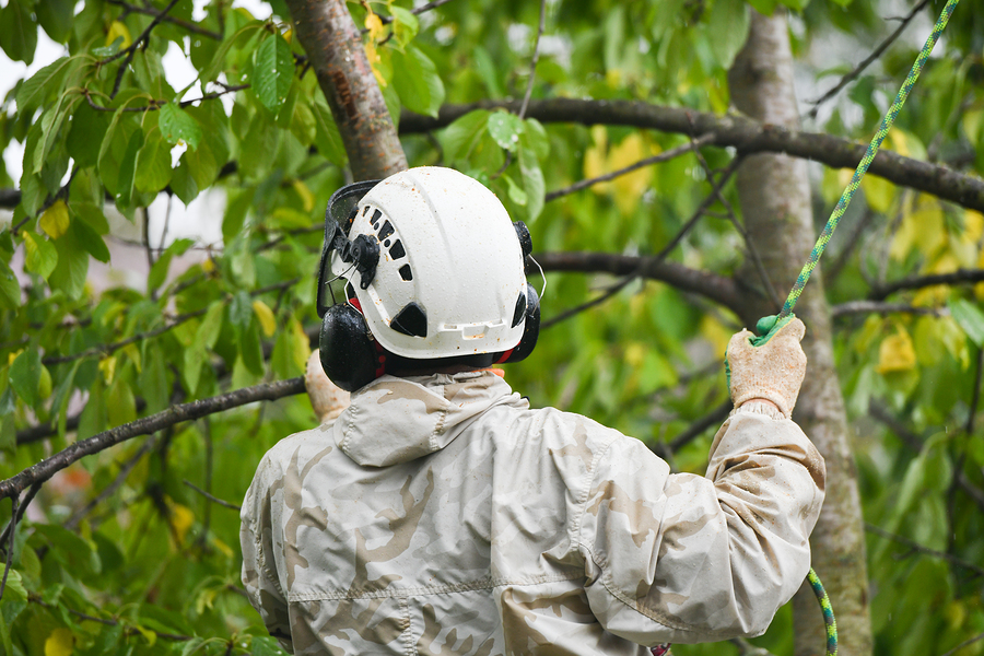 professional tree trimming and tree pruning