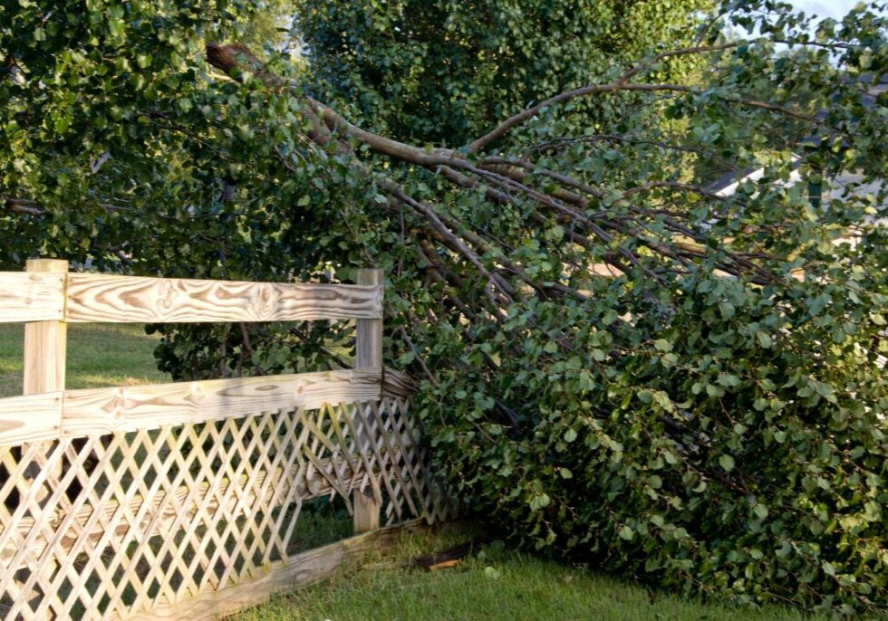 affordable emergency tree services