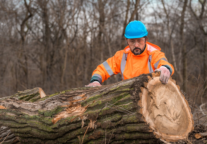 professional tree services near me